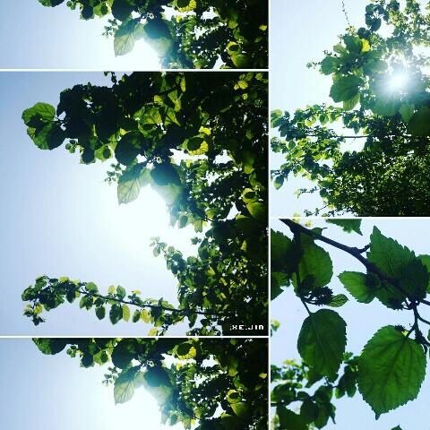 jin17_0507_mulberry.jpg